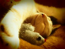 Cat. The cat is sleeping With a litten Teddy mous Royalty Free Stock Photography