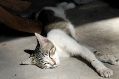 Cat sleeping in the morning sun Stock Photos