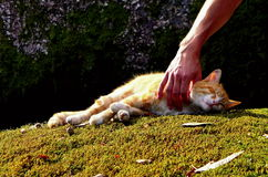 Cat sleeping on the moss Stock Image