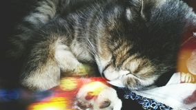 The cat is sleeping stock photos