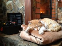 Cat sleeping near fireplace Royalty Free Stock Photos