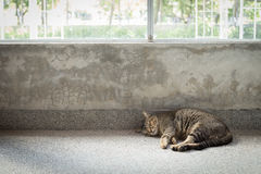 A cat sleeping next to the windows. A stray cat sleeping next to the windows next to the garden Stock Image