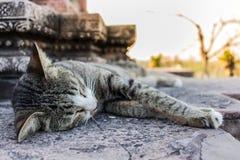 Cat Sleeping no templo fotografia de stock