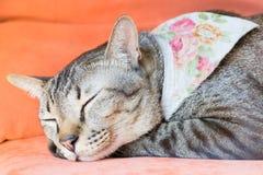 A cat sleeping on orange sofa, sweet dreams. Stock Photos