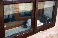 Cat sleeping, Osijek, Croatia Royalty Free Stock Photography