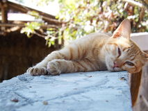Cat sleeping outdoor. On the cement wall Royalty Free Stock Photos