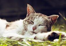 Cat sleeping outdoor. Retro toned image  Stock Photo