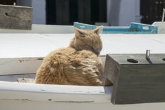 A cat sleeping over a boat in Binibequer Vell Fishermen Town Stock Photography