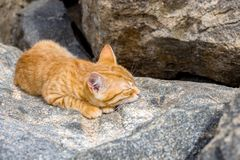 Cat sleeping peacefully in the sun on a stone on a beach, in sunny day.  Royalty Free Stock Photography