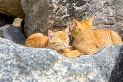 Cat sleeping peacefully in the sun on a stone on a beach, in sunny day Royalty Free Stock Photos