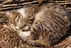 Cat sleeping Stock Photos