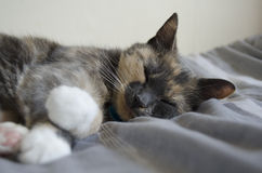 Cat. A sleeping pet cat. Catnap Stock Photo