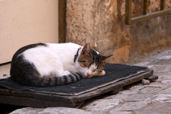 Cat Sleeping. On a picturesque cobblestone street. In Trogir, Croatia. Selective focus royalty free stock photos