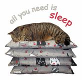 Cat rests on a pile of pillows royalty free illustration