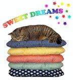 Cat sleeps on a pile of pillows. The cat is sleeping on a pile of pillows. Sweet dreams. White background stock illustration