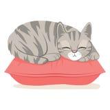 Cat Sleeping On Pillow Fotografia Stock