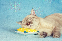 Cat sleeping on the pillow Stock Image