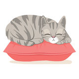 Cat Sleeping On Pillow. Cute cat on a pink pillow sleeping happy having sweet dreams Stock Photography