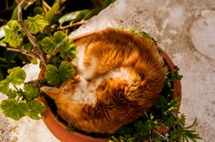 Cat sleeping in a pot stock photos