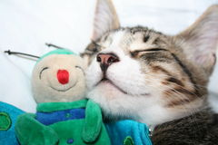Cat sleeping with puppet Stock Photos