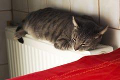 Cat sleeping on radiator Stock Photo