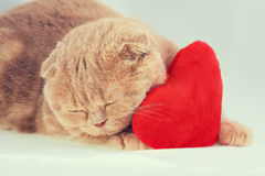 Cat sleeping on red heart-shaped pillow Royalty Free Stock Photography