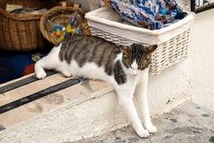 Cat sleeping relaxing in shop doorway. Cat, feeling safe, relaxes and sleeps in the shop doorway Stock Images