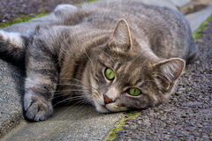 Cat sleeping on road. Nature photo: cat lying on the road and looking for someone to play with him stock photo