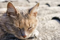 Cat sleeping on a roof Stock Photo