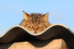 Cat sleeping on the roof, cat basking in the sun and sunbathing stock photo