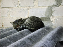 Cat sleeping on a roof Royalty Free Stock Images