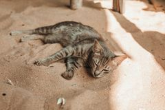 Cat sleeping on the sand. Cute cat sleeping on the sand in a shade Royalty Free Stock Images
