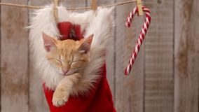 Cat sleeping in a santa hat hanging on drying line, swinging stock video