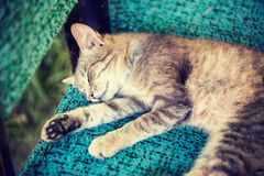 Cat sleeping serenely on a chair. Cute gray cat sleeping on a chair in the yard stock photos