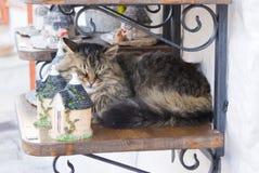 Cat sleeping a shelf Stock Photos