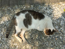 Cat sleeping on sidewalk pathway Royalty Free Stock Images