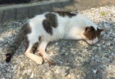 Cat sleeping on sidewalk pathway Stock Photography