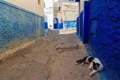 Cat sleeping in the small streets in blue and white in the kasba Stock Photo