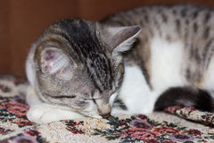 Cat sleeping on a sofa Stock Photo