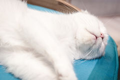 Cat sleeping on the sofa bed Royalty Free Stock Images