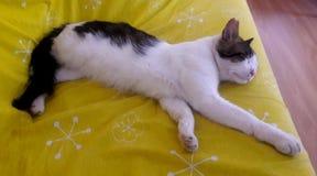 Cat Sleeping on Sofa Stock Image