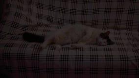 Cat sleeping on sofa stock video