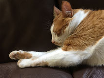 Cat sleeping on sofa Royalty Free Stock Image