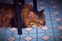 The Cat Sleeping Soundly Underneath The Dinner Table. Caught my cat sleeping under the table. It likes to sleep there because the semen is cool stock photo