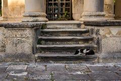 Cat sleeping in stairs, Corfu island, Greece Royalty Free Stock Photos