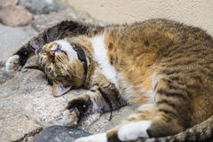 Cat sleeping on the stone pavement Stock Photography