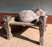 Cat Sleeping on Stool Stock Images