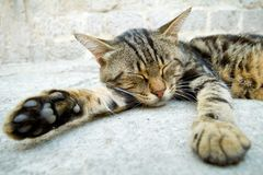 Cat sleeping in the street Royalty Free Stock Image