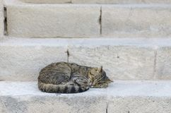 Cat sleeping in a street over antique steps stones Stock Image