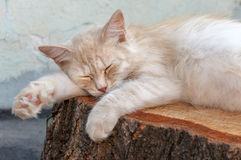 The cat is sleeping on a stump of a tree. Close up Stock Photography